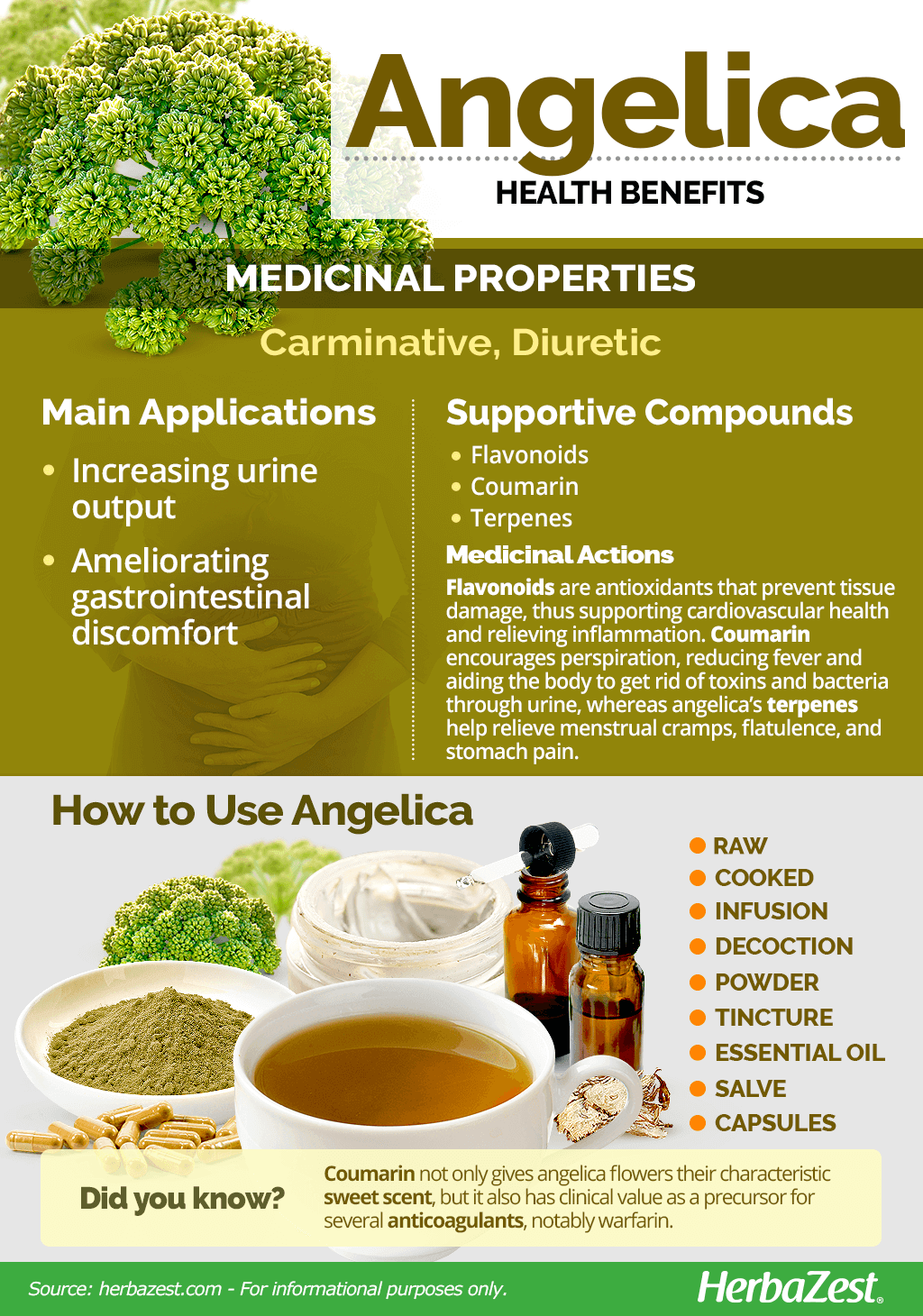 Angelica Benefits