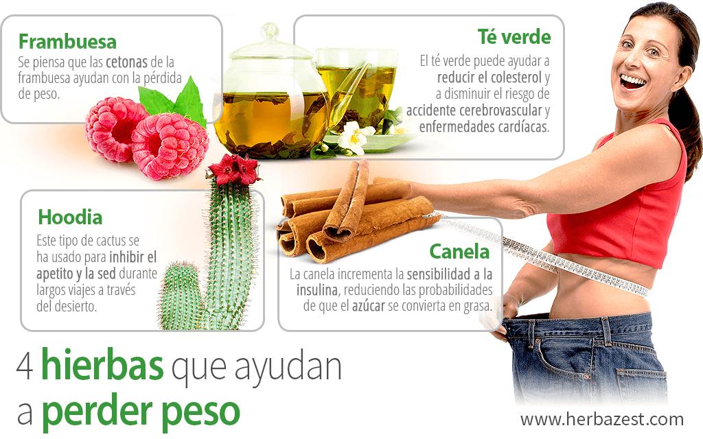 4 hierbas que ayudan a perder peso