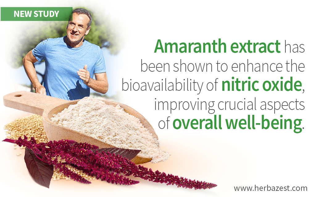 Amaranth Extract Increases Levels of Nitric Oxide in the Body