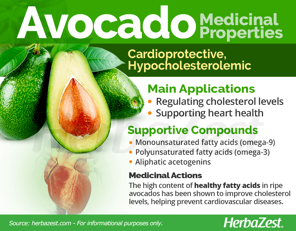 Avocado Medicinal Properties