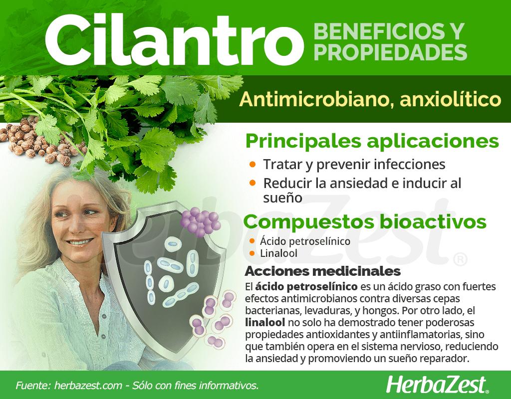 Beneficios y propiedades del cilantro