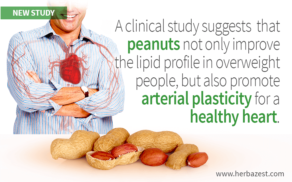 A clinical study suggests that peanuts not only improve the lipid profile in overweight people, but also promote arterial plasticity for a healthy heart.