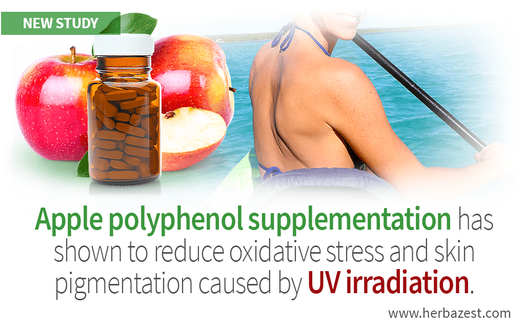 Skin Pigmentation Due to UV Irradiation Improved by Apple Polyphenols