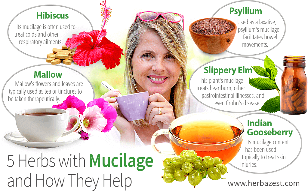 5 Herbs with Mucilage and How They Help