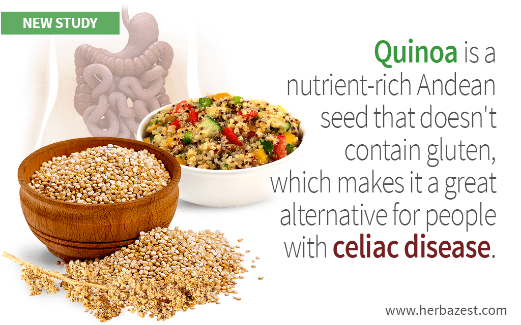 Quinoa is a nutrient-rich Andean seed that doesn't contain gluten, which makes it a great alternative for people with celiac disease.