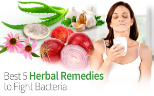 Best 5 Herbal Remedies to Fight Bacteria