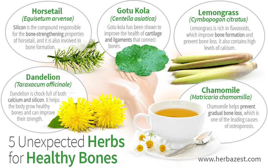 5 Unexpected Herbs for Healthy Bones