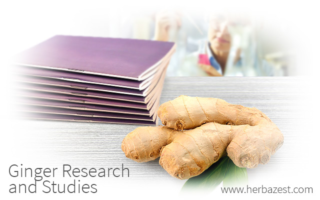 Ginger Research and Studies