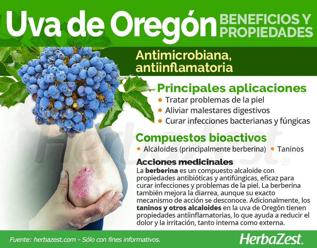 Beneficios y propiedades de la uva de Oregón