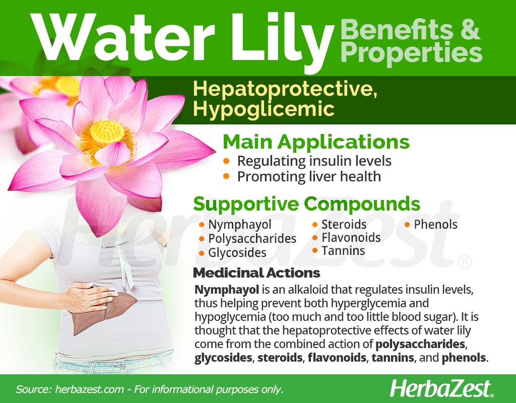 Water Lily Benefits and Properties