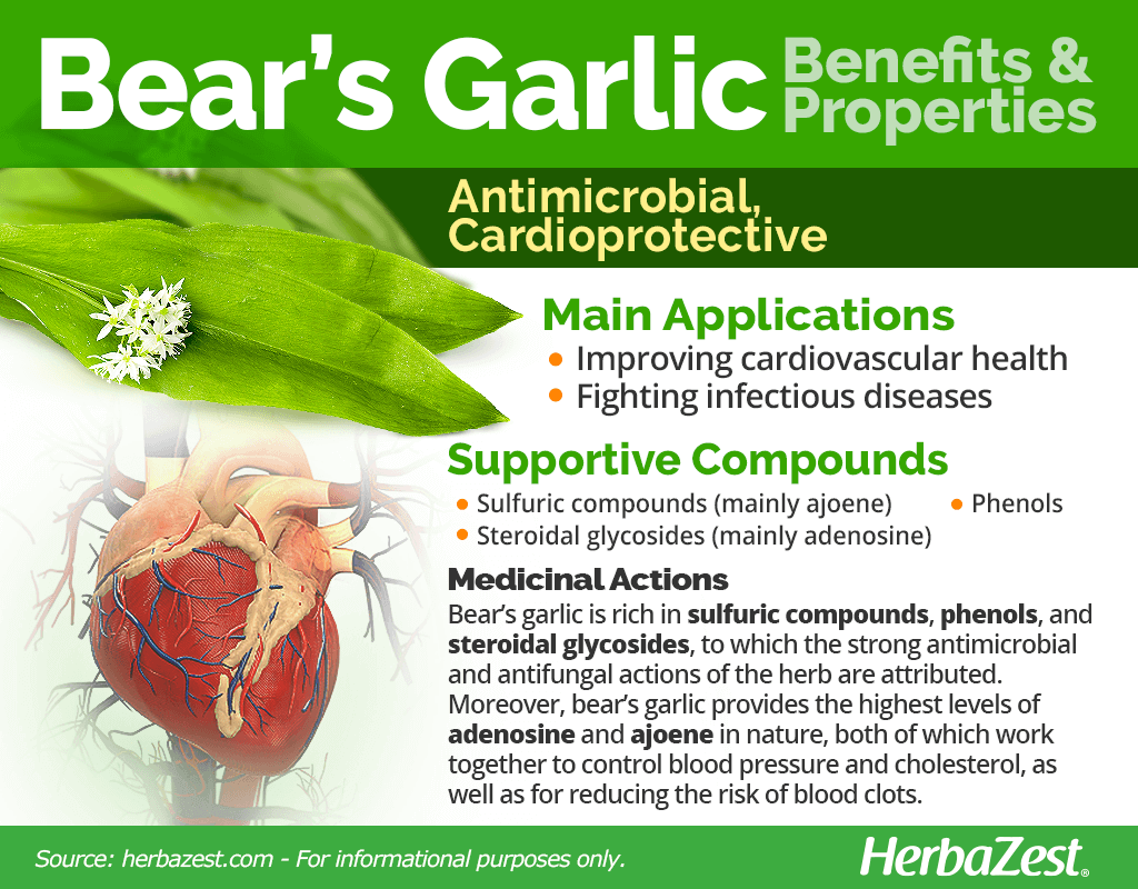 Bear's Garlic Benefits and Properties