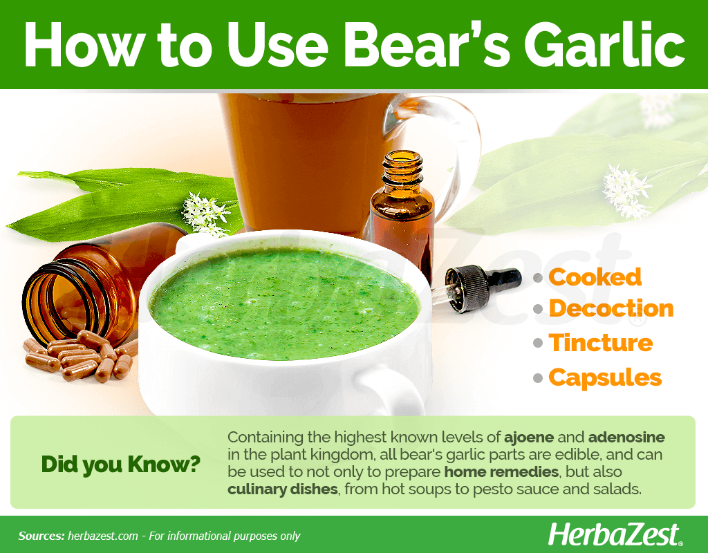How to Use Bear's Garlic