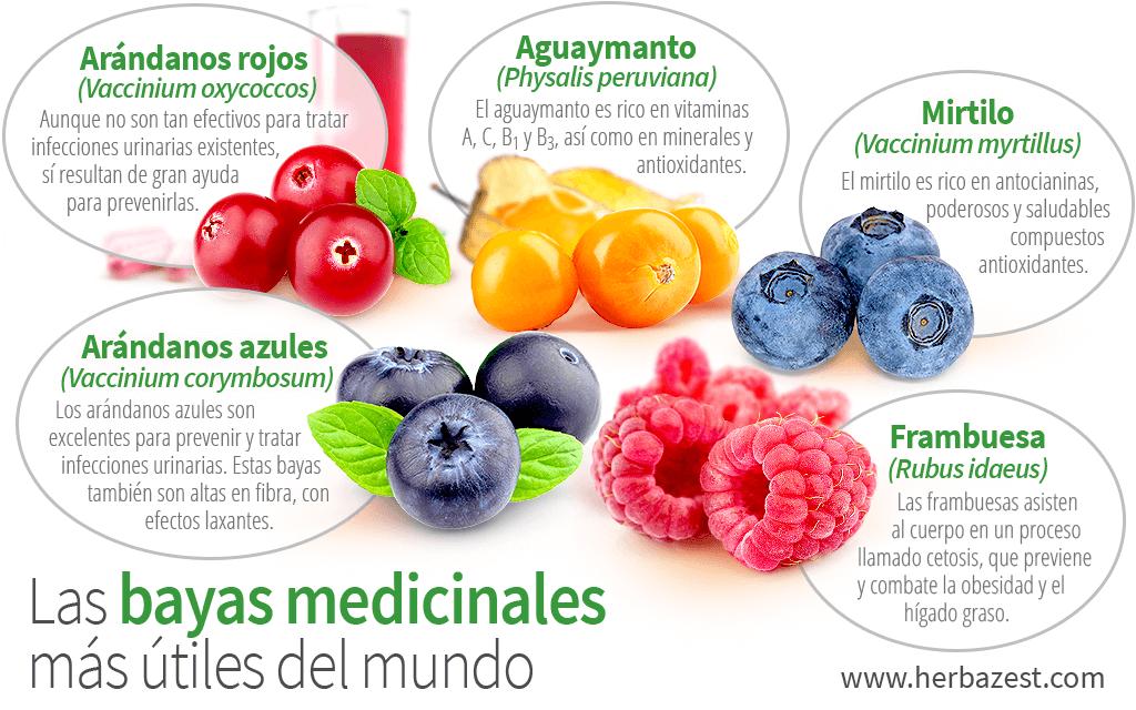 Las bayas medicinales más útiles del mundo