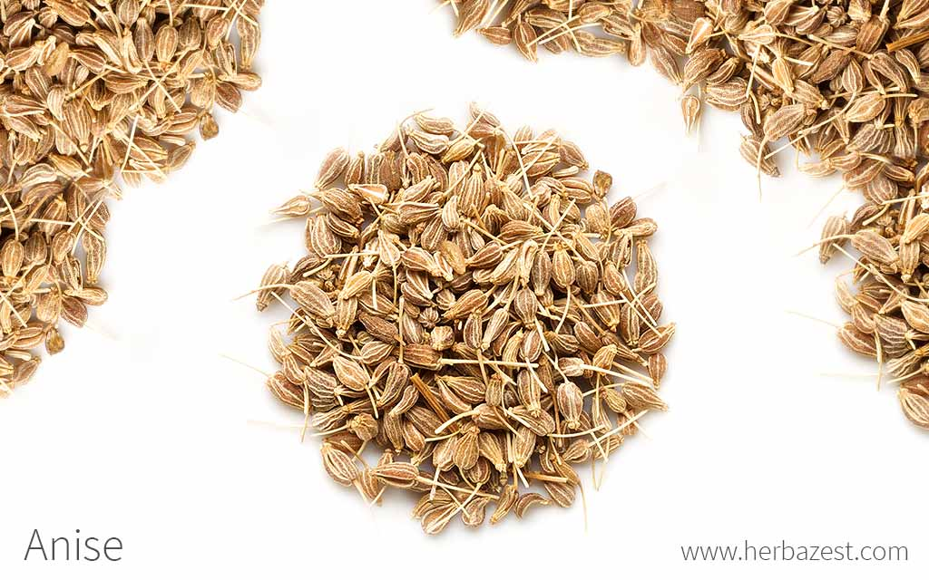 Anise herbazest - Medicinal herbs harvest august dry store ...
