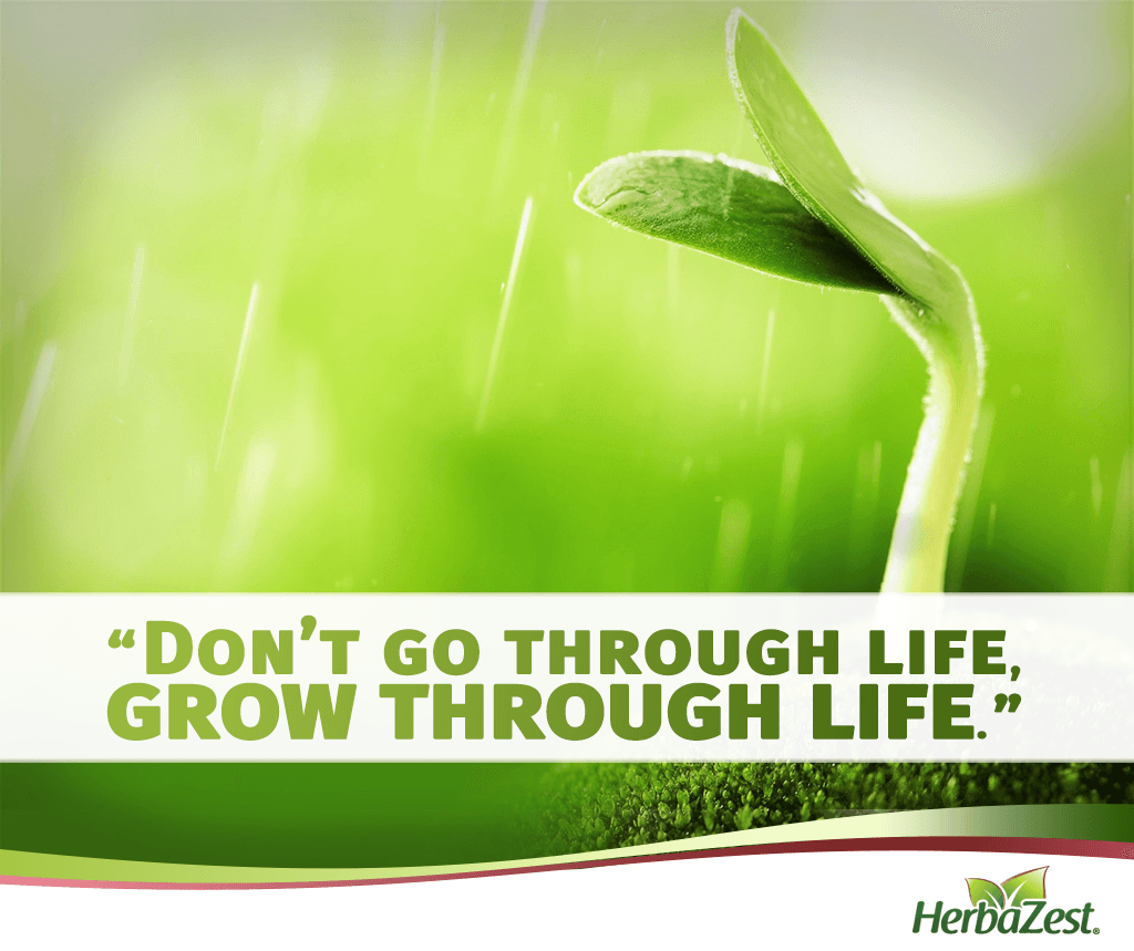 Quote: Don't Go Through Life, Grow Through Life