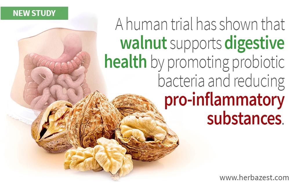 Walnut Supports Digestive Health, Study Reveals