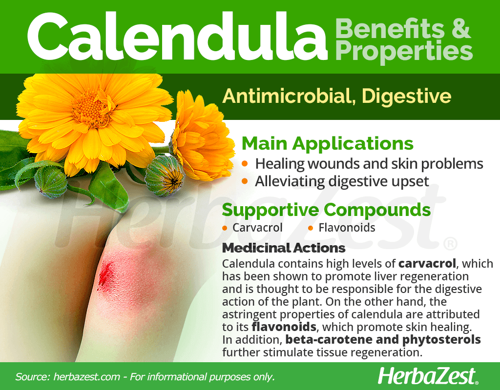 Calendula Benefits and Properties