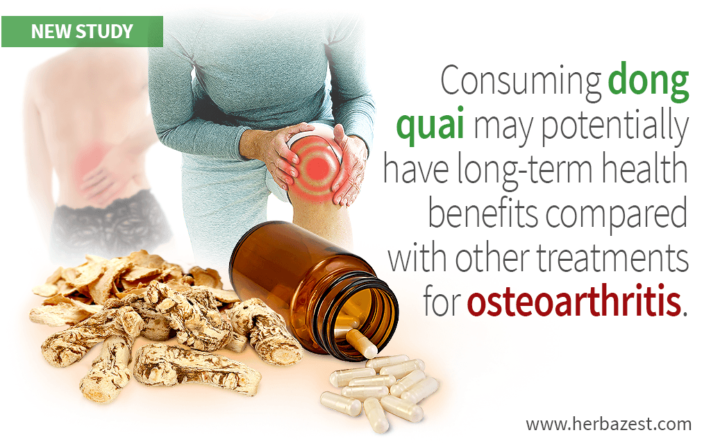 Consuming dong quai may potentially have long-term health benefits compared with other treatments for osteoarthritis.