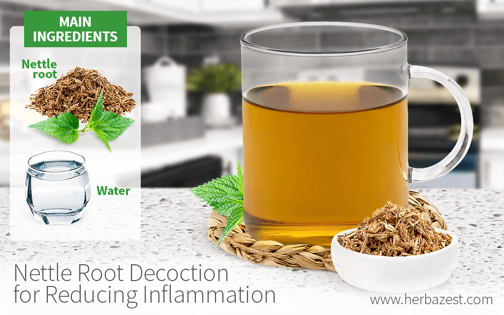 Nettle Root Decoction for Reducing Inflammation