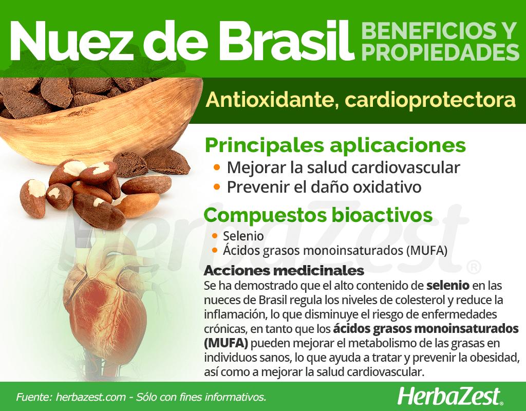 Beneficios y propiedades de la nuez de Brasil
