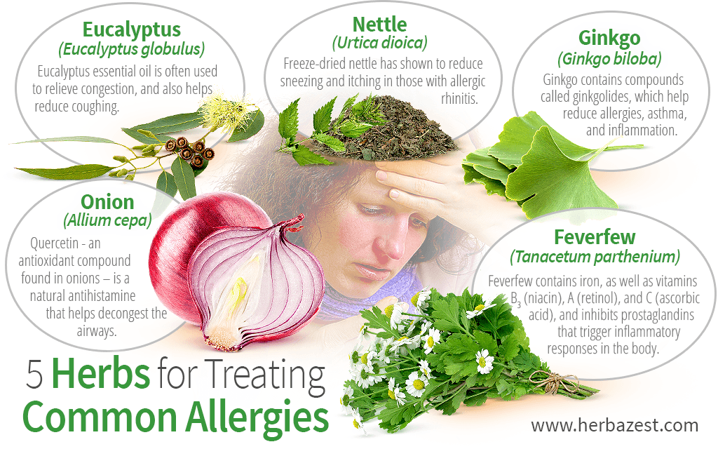 5 Herbs for Treating Common Allergies