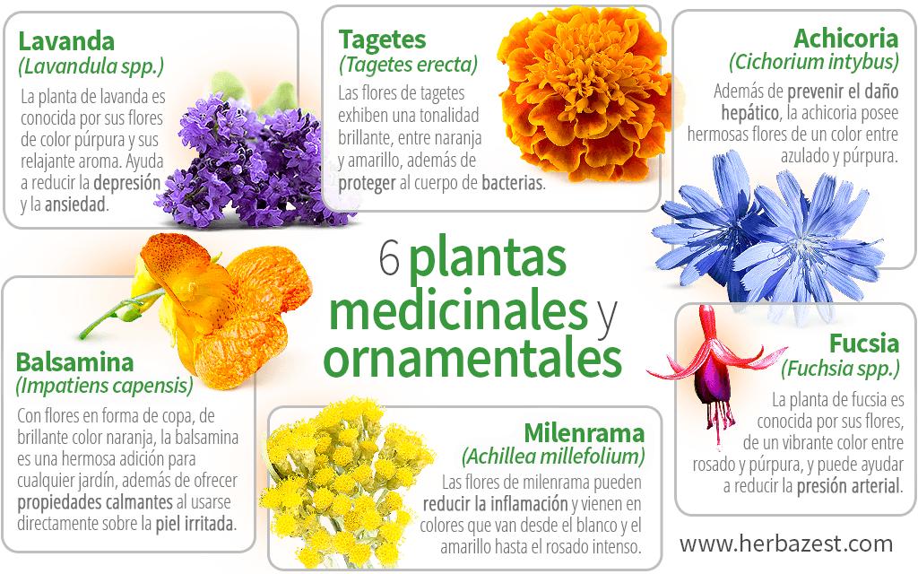 6 plantas medicinales y ornamentales