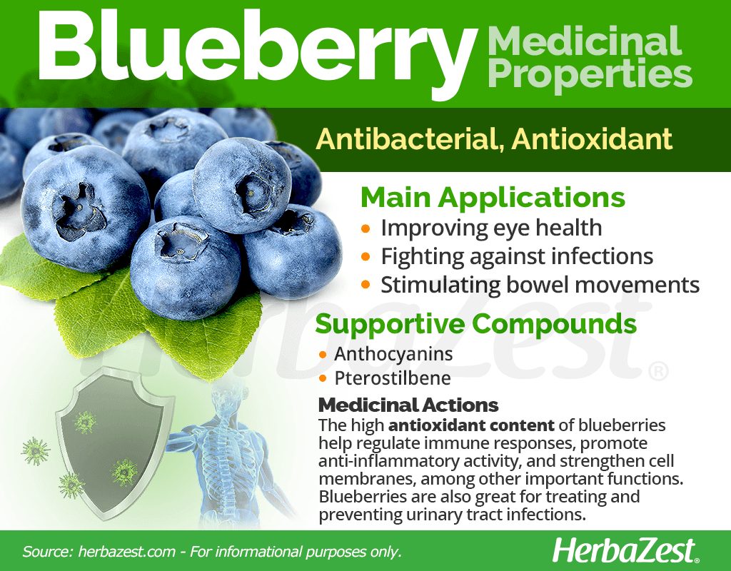 Blueberry Medicinal Properties