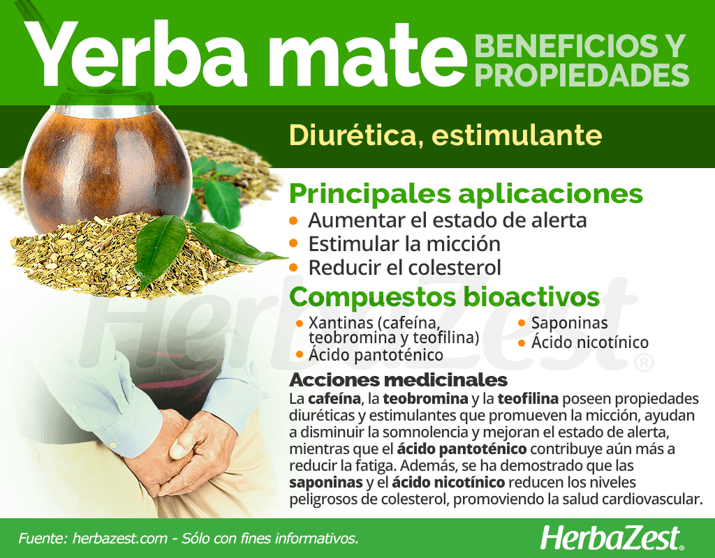 Beneficios y propiedades de la yerba mate