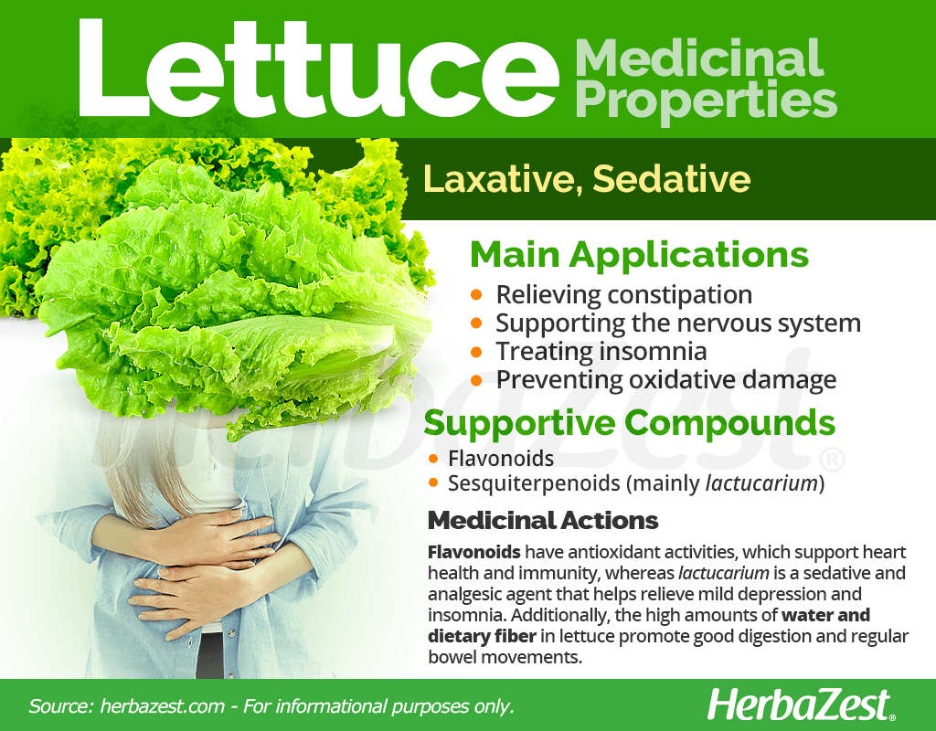 Lettuce Medicinal Properties