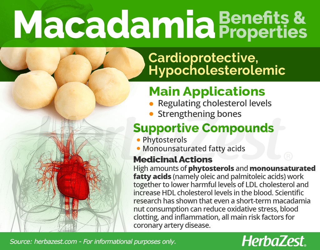 Macadamia Nuts Benefits and Properties