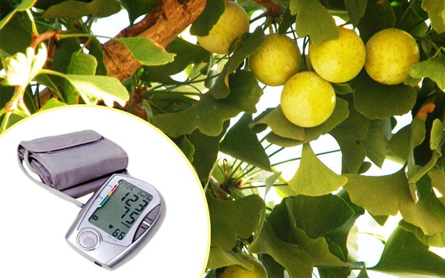 New Study: Gingko Extract for Hypertension
