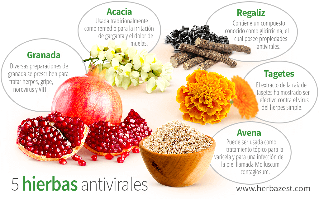 5 hierbas antivirales