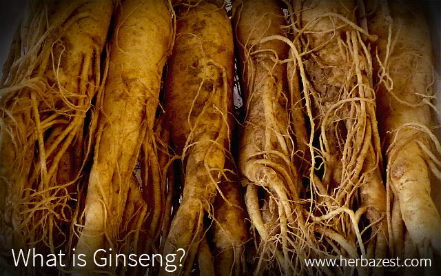 What Is Ginseng?