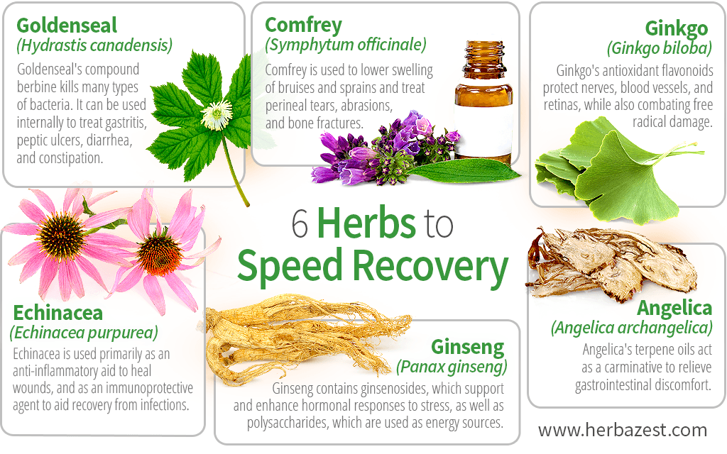 6 Herbs to Speed Recovery