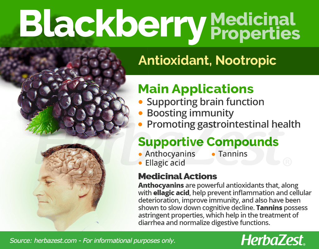 Blackberry Medicinal Properties