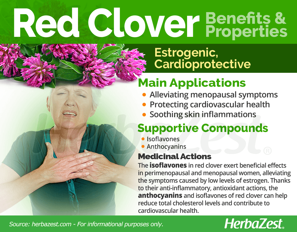 Red Clover Benefits and Properties
