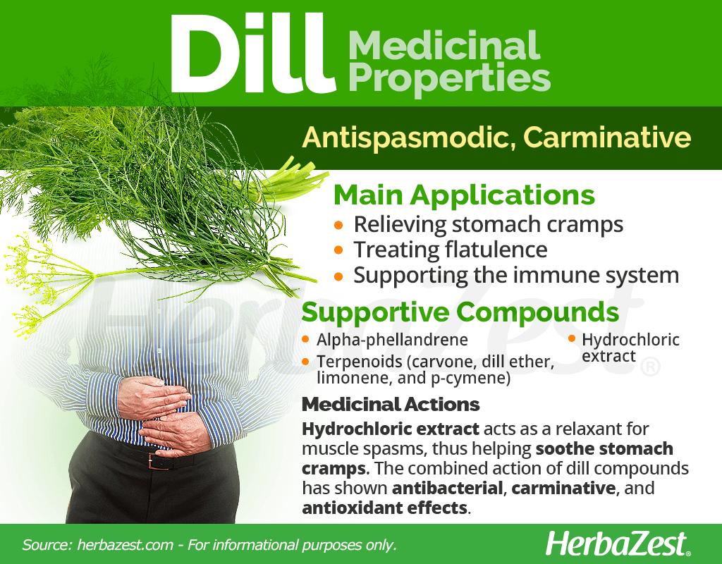 Dill Medicinal Properties