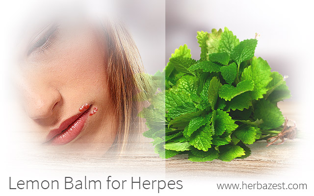 Lemon Balm for Herpes