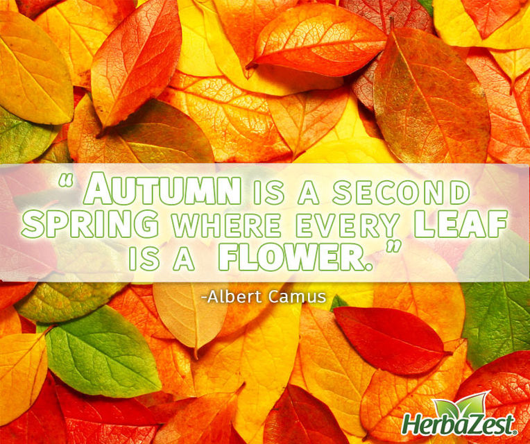Quote: Autumn is a Second Spring Where Every Leaf is a Flower  HerbaZest