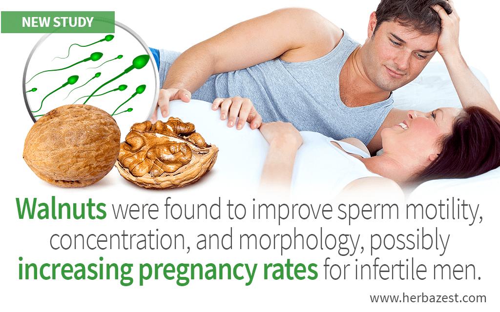 Walnut Consumption Improves Sperm Parameters in Infertile Men