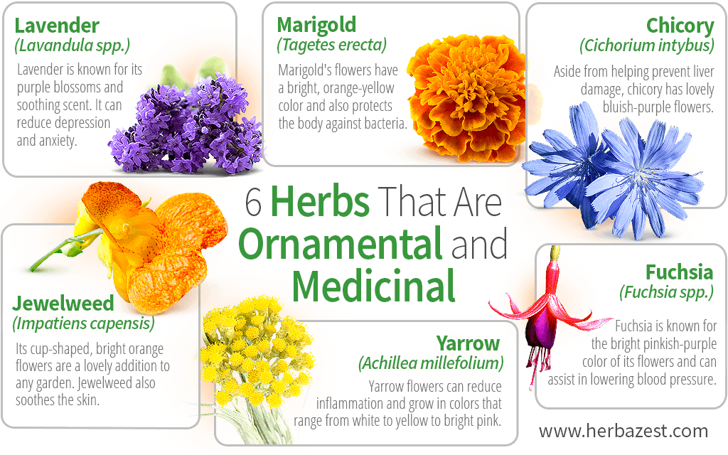 6 Herbs That Are Ornamental and Medicinal