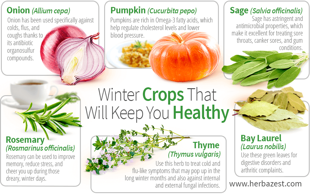 Winter Crops That Will Keep You Healthy