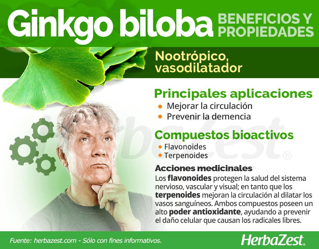 Beneficios y propiedades del ginkgo biloba