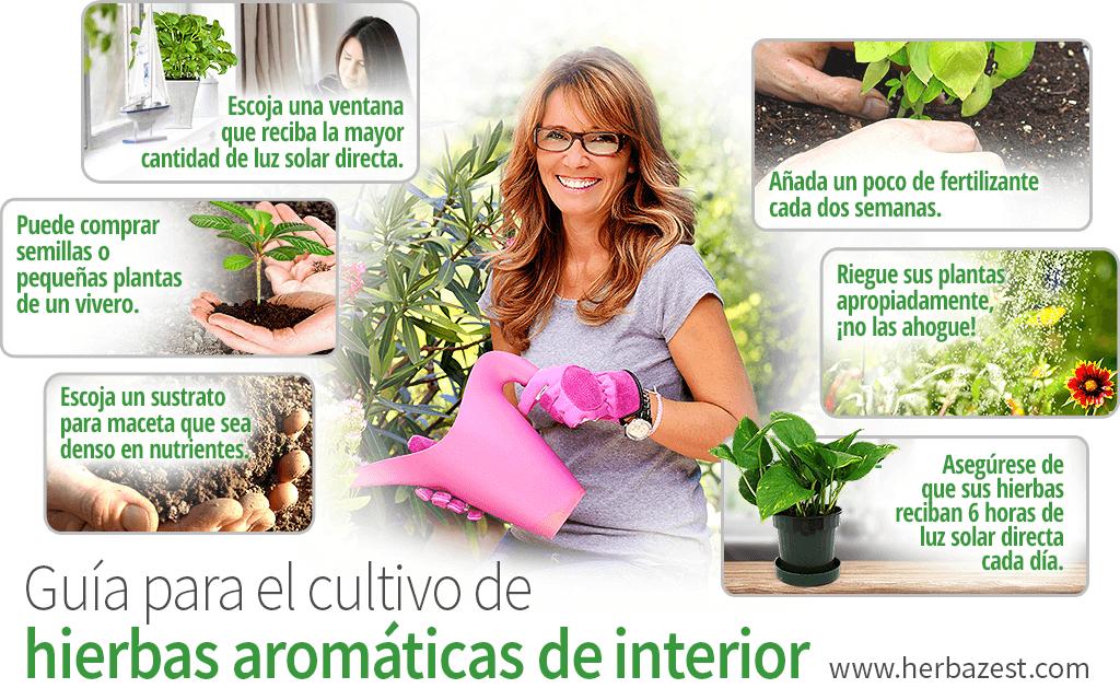 Guía para el cultivo de hierbas aromáticas de interior