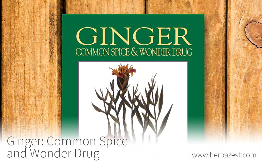 Ginger: Common Spice and Wonder Drug