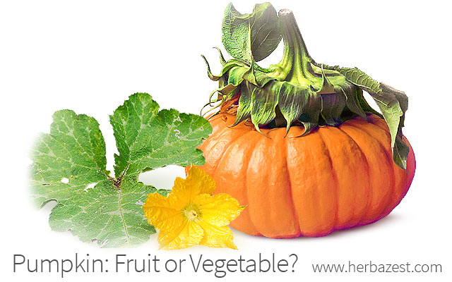 Pumpkin: Fruit or Vegetable?