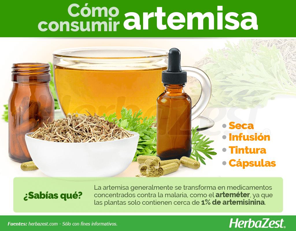 Cómo consumir artemisa