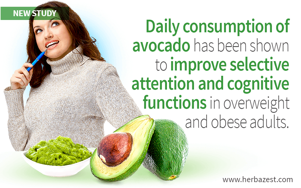 Avocado Consumption Shown to Improve Cognitive Function in Overweight and Obese Adults