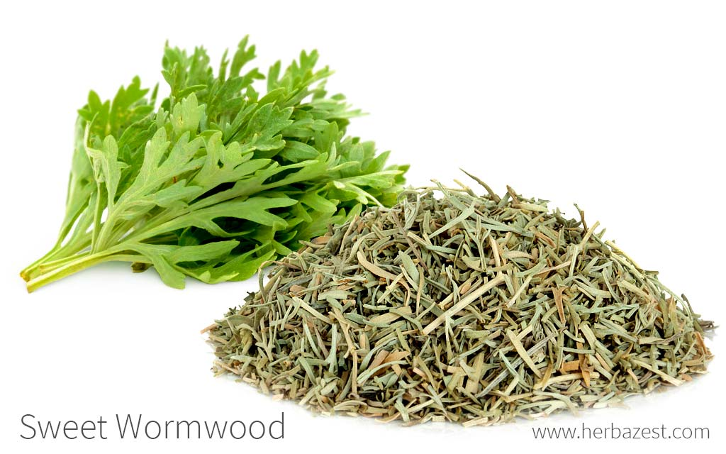 Sweet Wormwood