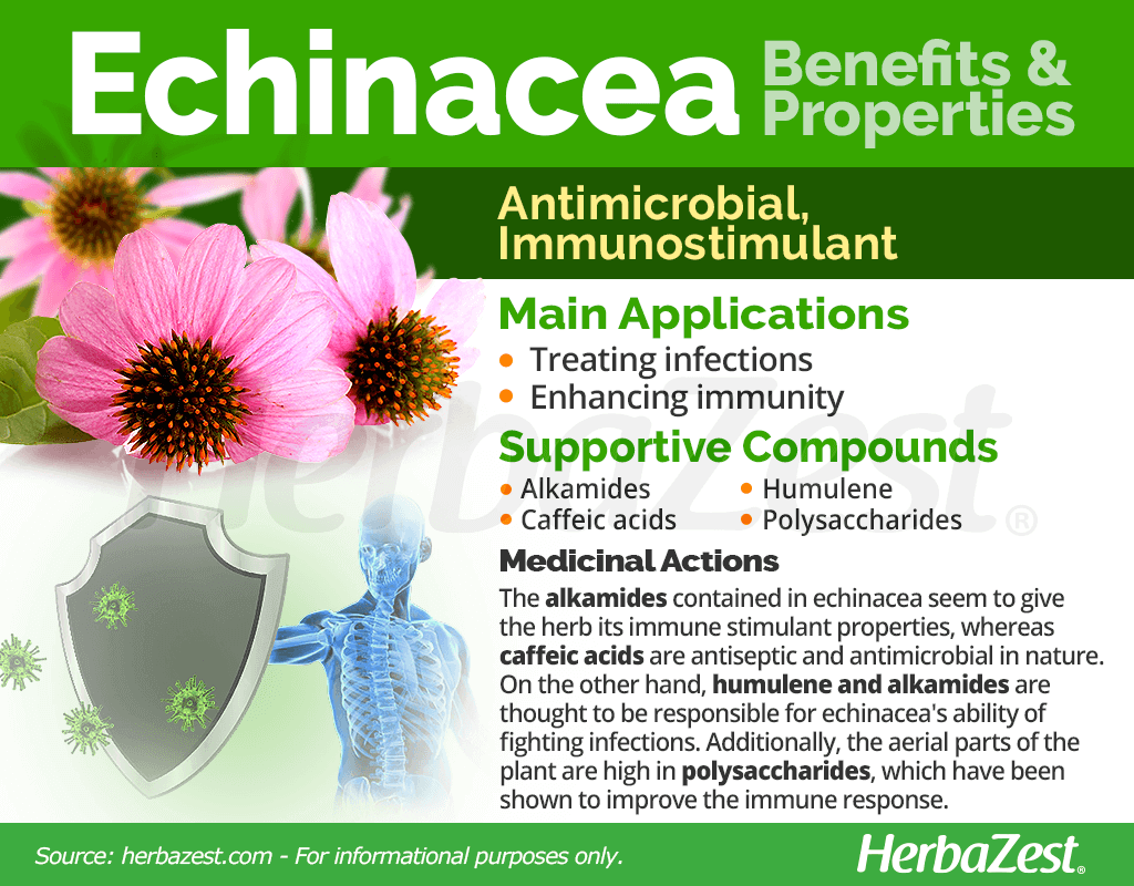 Echinacea Benefits & Properties